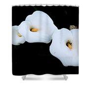 Three Calla Lilies Shower Curtain