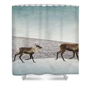 Three Caribous Shower Curtain by Priska Wettstein