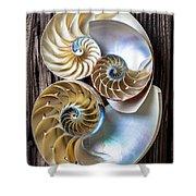 Three Chambered Nautilus Shower Curtain by Garry Gay