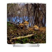 Three Cute Kit Foxes At Attention Shower Curtain