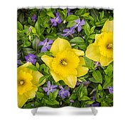 Three Daffodils In Blooming Periwinkle Shower Curtain
