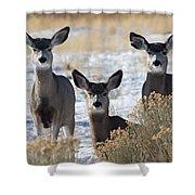 Three Deer Shower Curtain