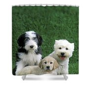 Three Diffferent Puppies Shower Curtain