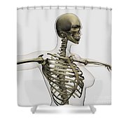 Three Dimensional View Of Female Rib Shower Curtain by Stocktrek Images