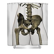 Three Dimensional View Of Human Pelvic Shower Curtain