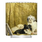 Three Dogs Shower Curtain