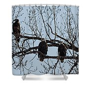 Three Eagles In Tree Shower Curtain