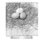 Three Eggs In A Nest Black And White Shower Curtain