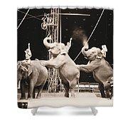 Three Elephant Circus Performance Shower Curtain