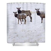 Three Elk Cows And Calf Shower Curtain