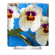 Three Exotic Orchids Shower Curtain