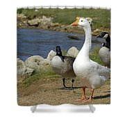 Three Geese Just Srolling Along Shower Curtain