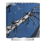 Three Gray Trees Shower Curtain