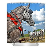 Three Horses Shower Curtain