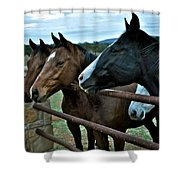 Three Horses Waiting For Carrots Shower Curtain