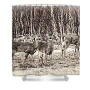 Three In The Field Shower Curtain