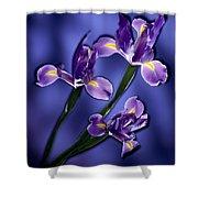 Three Iris Xiphium Shower Curtain
