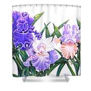 Three Irises Shower Curtain