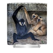 Three Is A Crowd Shower Curtain