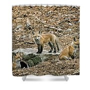 Three Kits Shower Curtain