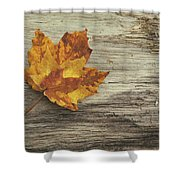 Three Leaves Shower Curtain by Scott Norris