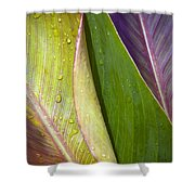 Three Leaves Shower Curtain