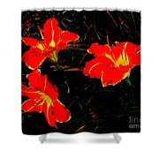Three Lilies Shower Curtain