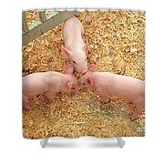 Three Little Pigs Shower Curtain