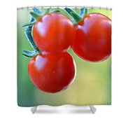 Three Little Tomatoes Shower Curtain