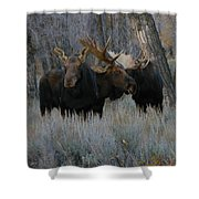 Three Moose In The Woods Shower Curtain