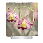 Three Orchid Beauties Shower Curtain