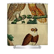 Three Owls Shower Curtain