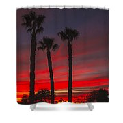 Three Palm Sunset Shower Curtain