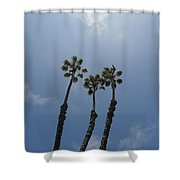 Three Palms Shower Curtain