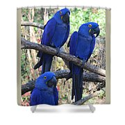 Three Pals Shower Curtain