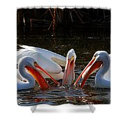 Three Pelicans And A Fish Shower Curtain