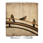 Three Pigeons Perched On A Metallic Arch. Shower Curtain