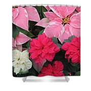 Three Pink Poinsettias Shower Curtain