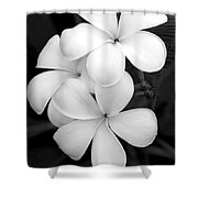 Three Plumeria Flowers In Black And White Shower Curtain by Sabrina L Ryan
