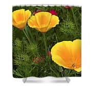 Three Poppies Shower Curtain