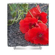 Three Poppies Too Shower Curtain