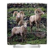 Three Rams Shower Curtain
