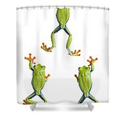Three Red Eyed Tree Frogs Climbing Shower Curtain