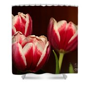 Three Red Tulips Shower Curtain