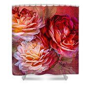 Three Roses Red Greeting Card Shower Curtain