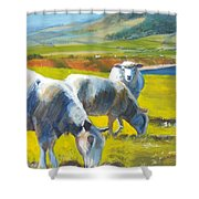 Three Sheep On A Devon Cliff Top Shower Curtain