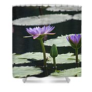 Three Stages Of Blue Bloom Shower Curtain
