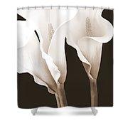 Three Tall Calla Lilies In Sepia Shower Curtain