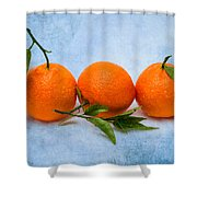 Three Tangerines Shower Curtain by Alexander Senin