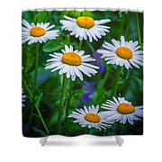 Three Tiers Of Beauty Shower Curtain